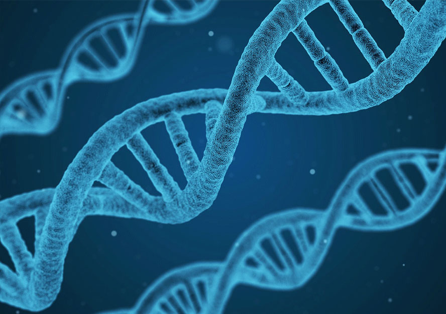 Biología - Ciencias Médicas - 2020 - 21
